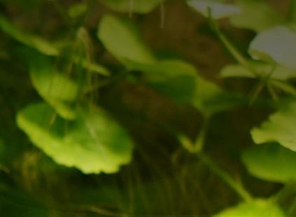 Wirbellose Schleimerchen