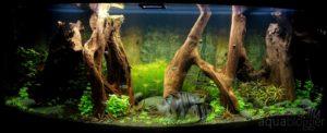 Aquarium 5 Wochen nach Neueinrichtung